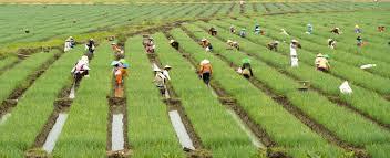 Photo of Dewan Jabar Cari Tahu Pertanian Bawang Merah Ke Brebes